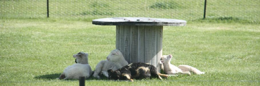 羊の国のテオテオ・ファーム