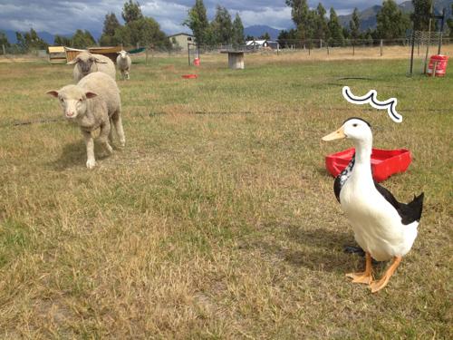 甘えに羊たちがやってくる。