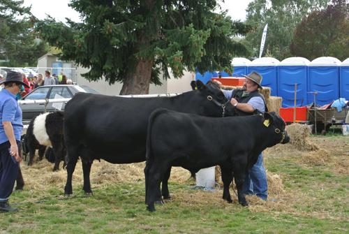 間違いなく有名な牛のブリーダーさんだとお見受けします。