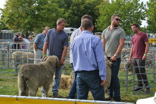 ニュージーランド南島の典型的な羊ファーマーの皆様。