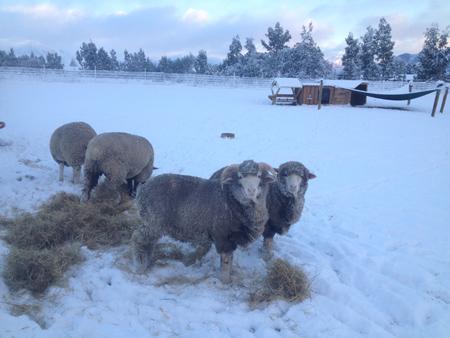 そして羊たちには麦わらを。(冬の非常食)