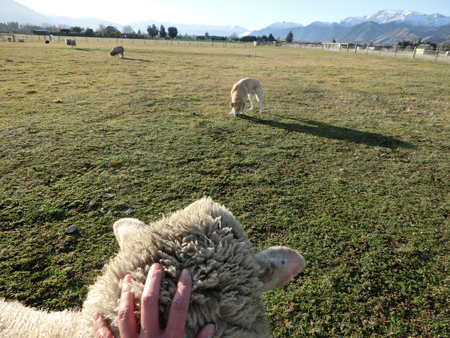「いいかい?チャーリー。羊として犬の言うことは素直に聞こうね?できるかな?」