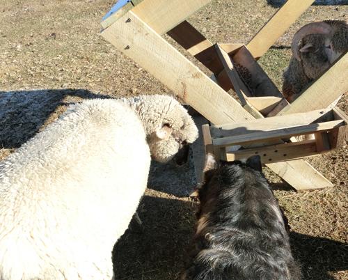 チャーリー(左、羊)とペネロペ(右、豚)