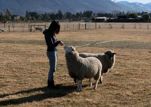 ゆうさん(左)とこまち(右、羊)