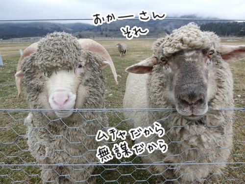羊さんチーム男子コンビ