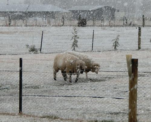 はじめての冬。はじめての雪。