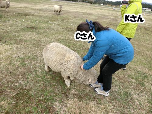 羊さんチーム代表サマンサ