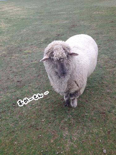 羊さんチームを代表してチャーリー(長男)