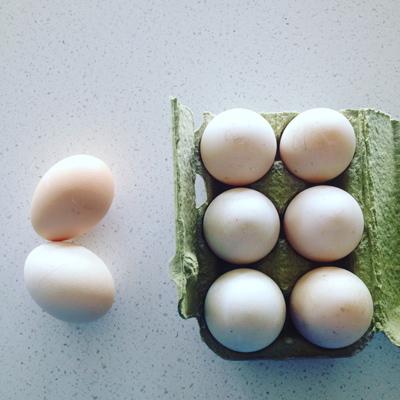 左の2個が比較のためのニワトリ卵。右の6個がアヒル。