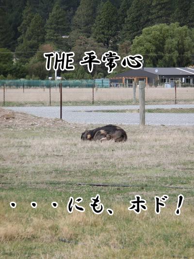 豚のお嬢様
