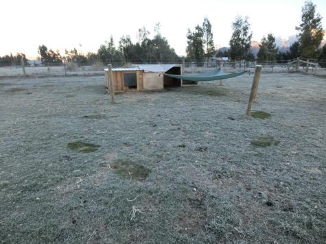 霜がおりてる朝。黒っぽいところが「羊が寝てた跡」です。